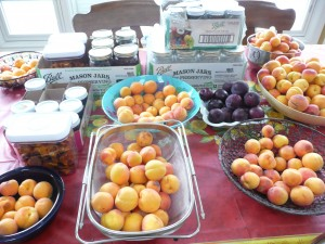 Feng Shui clutter or Feng Shui abundance? A bountiful array of apricots - plus some plums - on my dining room table located in our great room/kitchen filled with containers for cleaning, cooking, canning and containing the abundance of apricots