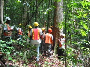 Pre-felling tree discussion from TFF website: http://www.tropicalforestfoundation.org/about